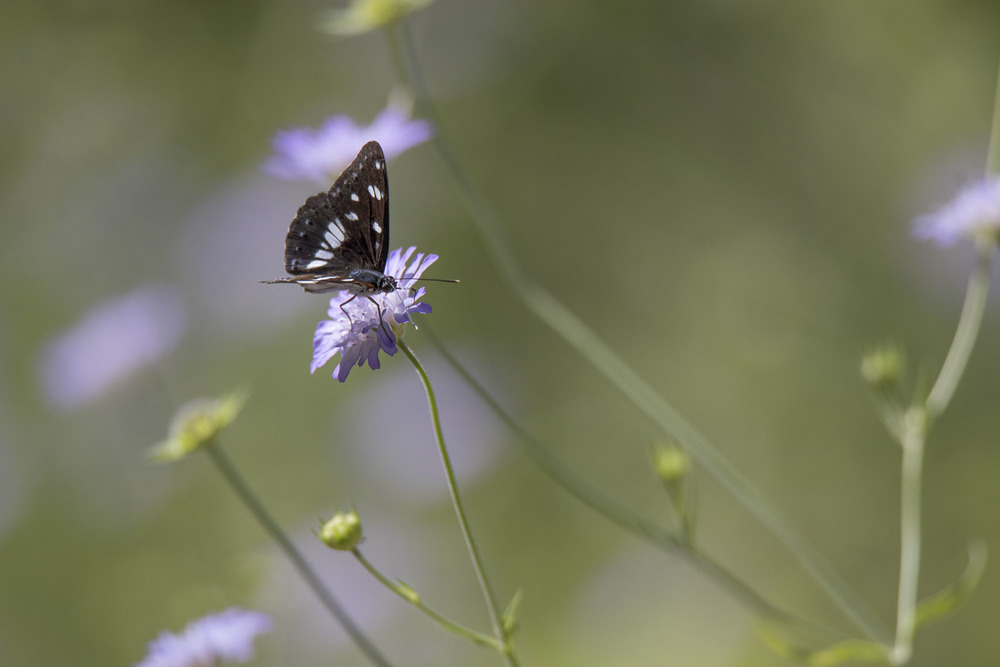 Butterflys everywhere