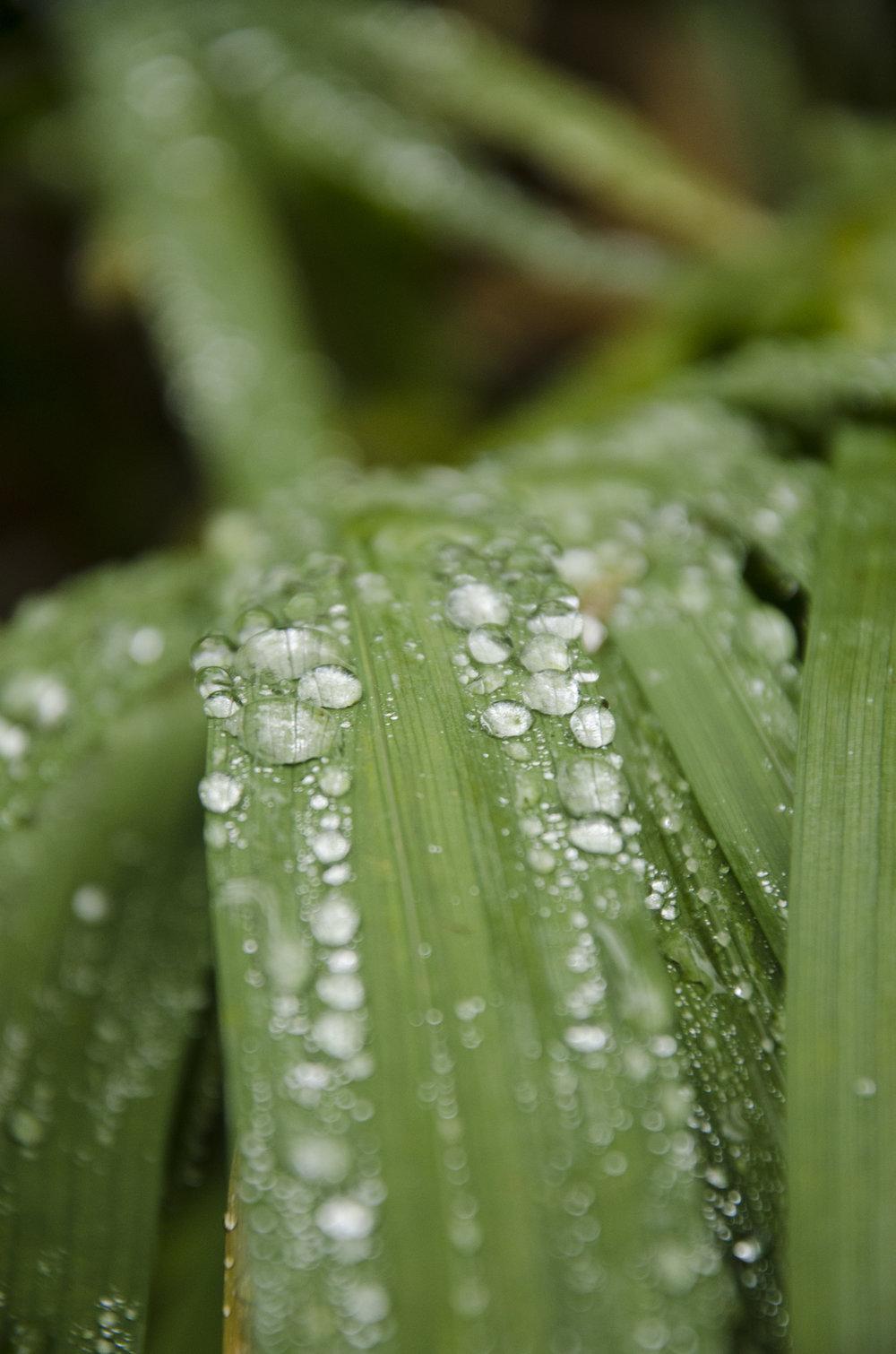 Water on Leaf