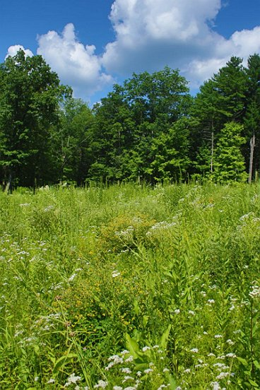 there should be ample nesting locations in a meadow like this.