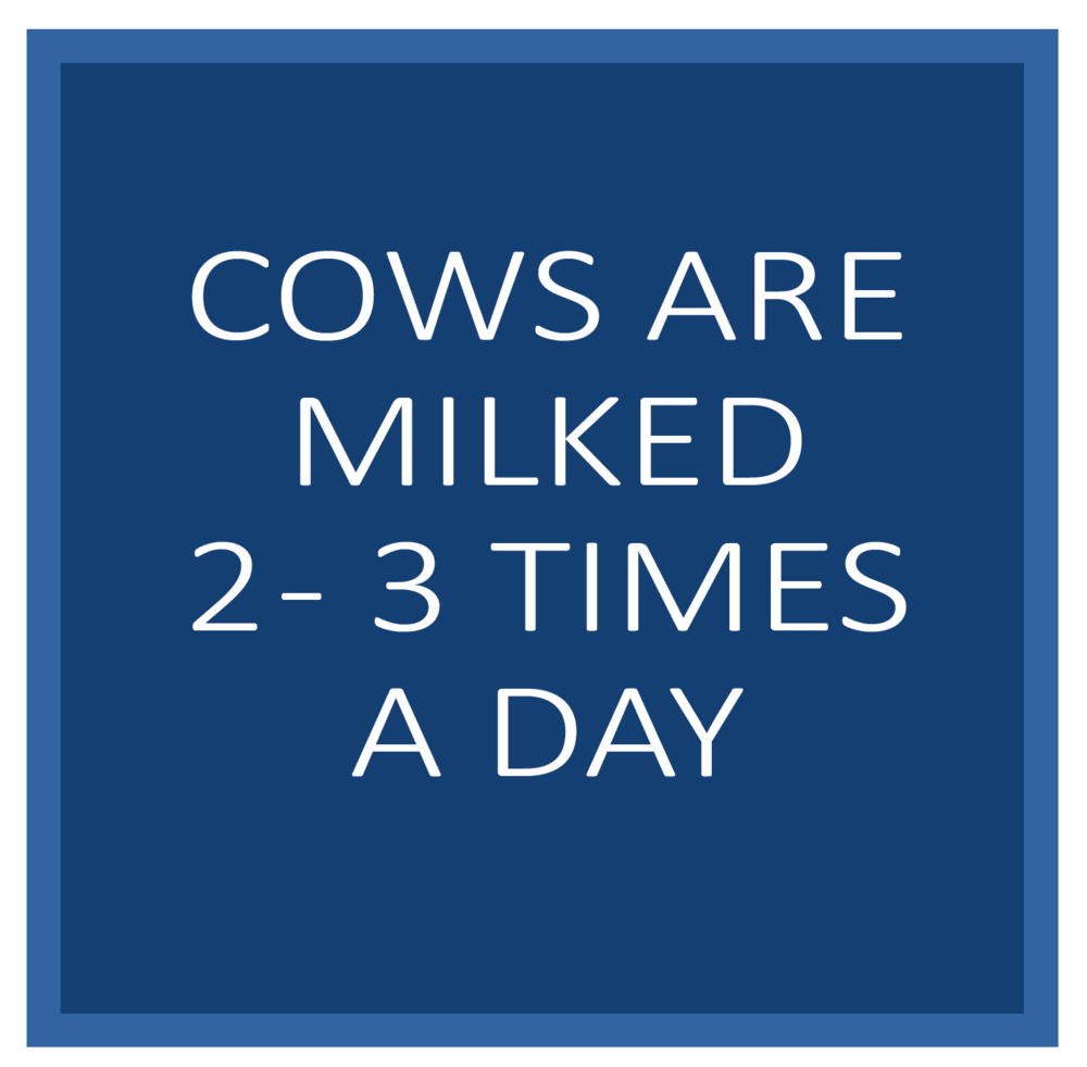 milked23perday.png