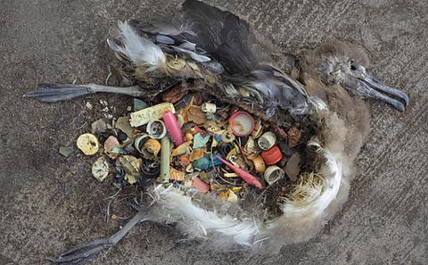 plasticbird.png