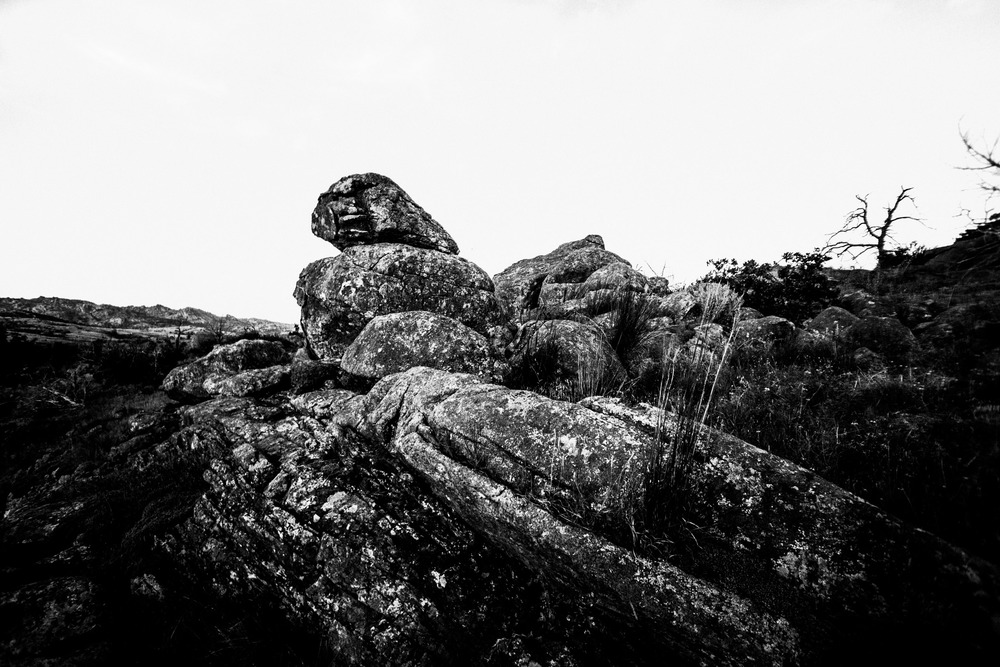Mount Mitchell B&W 08-07-16 (3 of 35).jpg