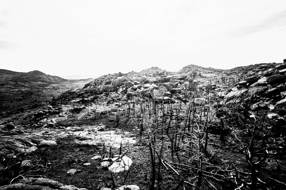 Mount Mitchell B&W 08-07-16 (23 of 35).jpg