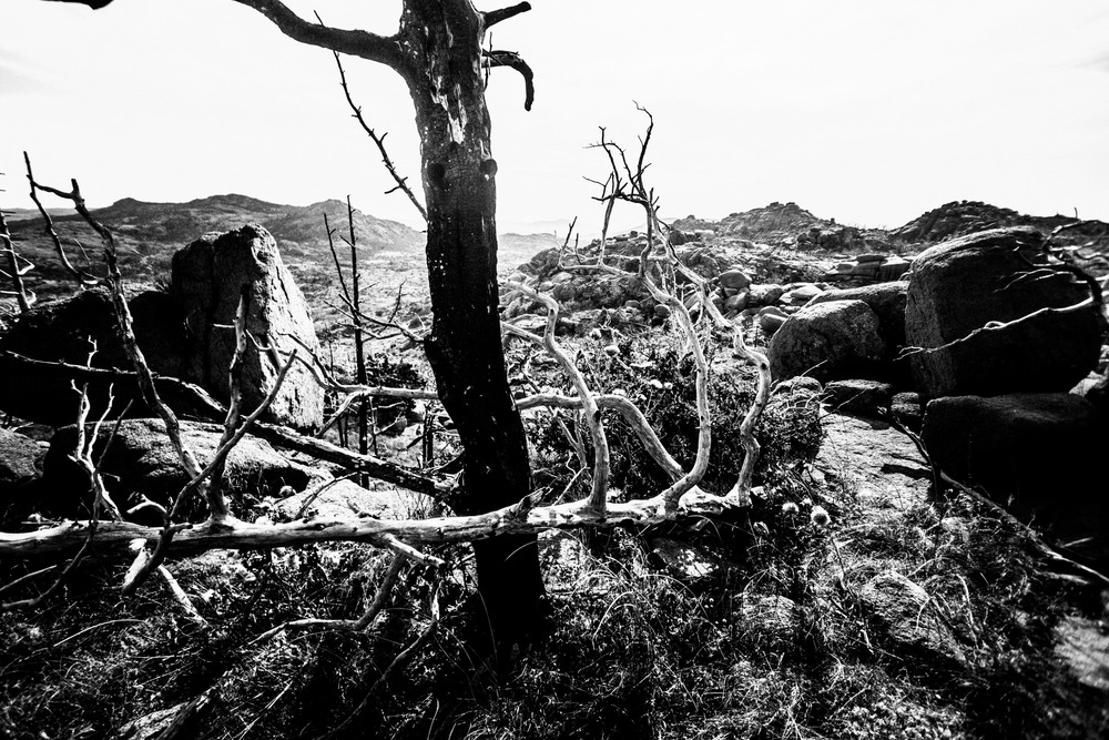 Mount Mitchell B&W 08-07-16 (22 of 35).jpg