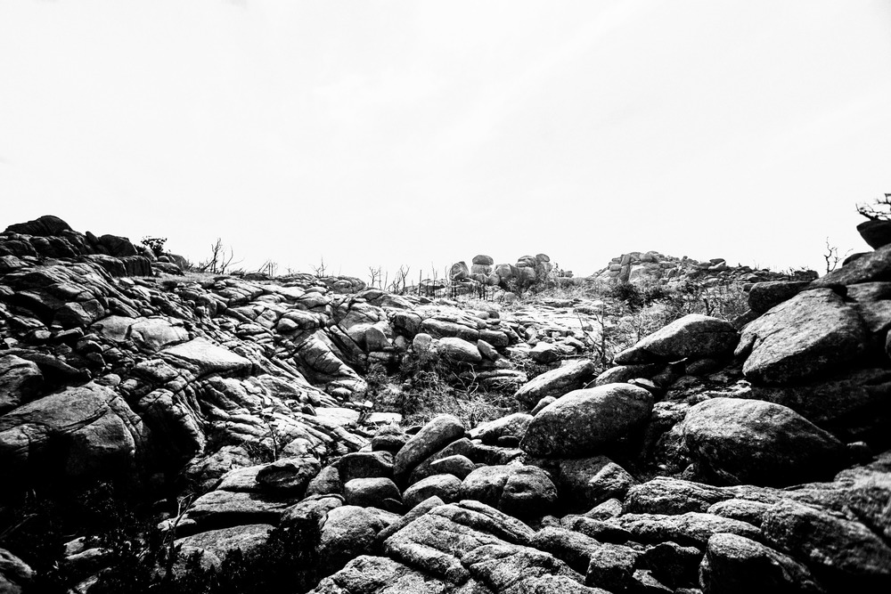 Mount Mitchell B&W 08-07-16 (33 of 35).jpg