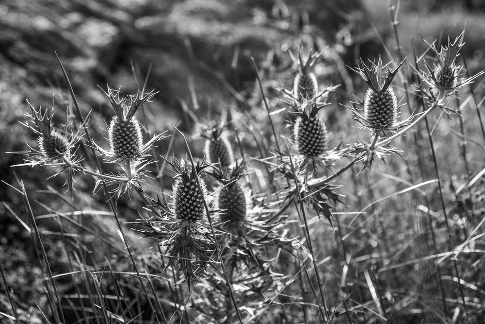 2017-09-03-spidersplit-b-5.jpg