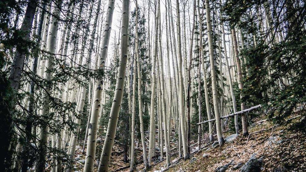 womenwhoexplore-womenwhohike-toddeclark-nature-adventure-mountains-mountain-outdoors-hike-wanderlust-beautiful-naturelovers-love-view-outdoor-neverstopexploring-backpacking-climbing-wilderness-optoutside-keepitwild-bw-5.jpg