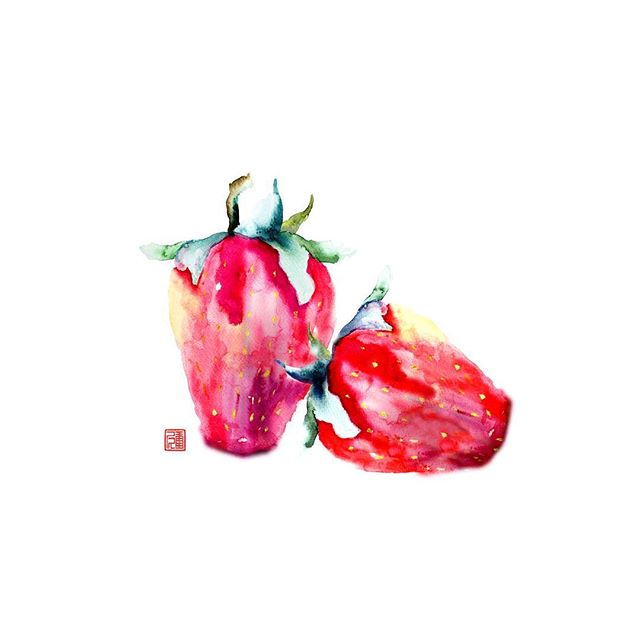 "Sans Berry #watercolor on #ricepaper The strawberry is not, from a botanical point of view, a berry. Technically, it is an aggregate accessory fruit, meaning that the fleshy part is derived not from the plant's ovaries but from the receptacle that holds the ovaries. Each apparent ""seed"" on the outside of the fruit is actually one of the ovaries of the flower, with a seed inside it. #strawberries #strawberry #fruit #painting #yum #foodie #foodies #foodiesofinstagram #valentine #love #loves #food"