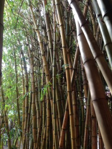 The lesson the bamboo is inspirational to all of us in our relationships.