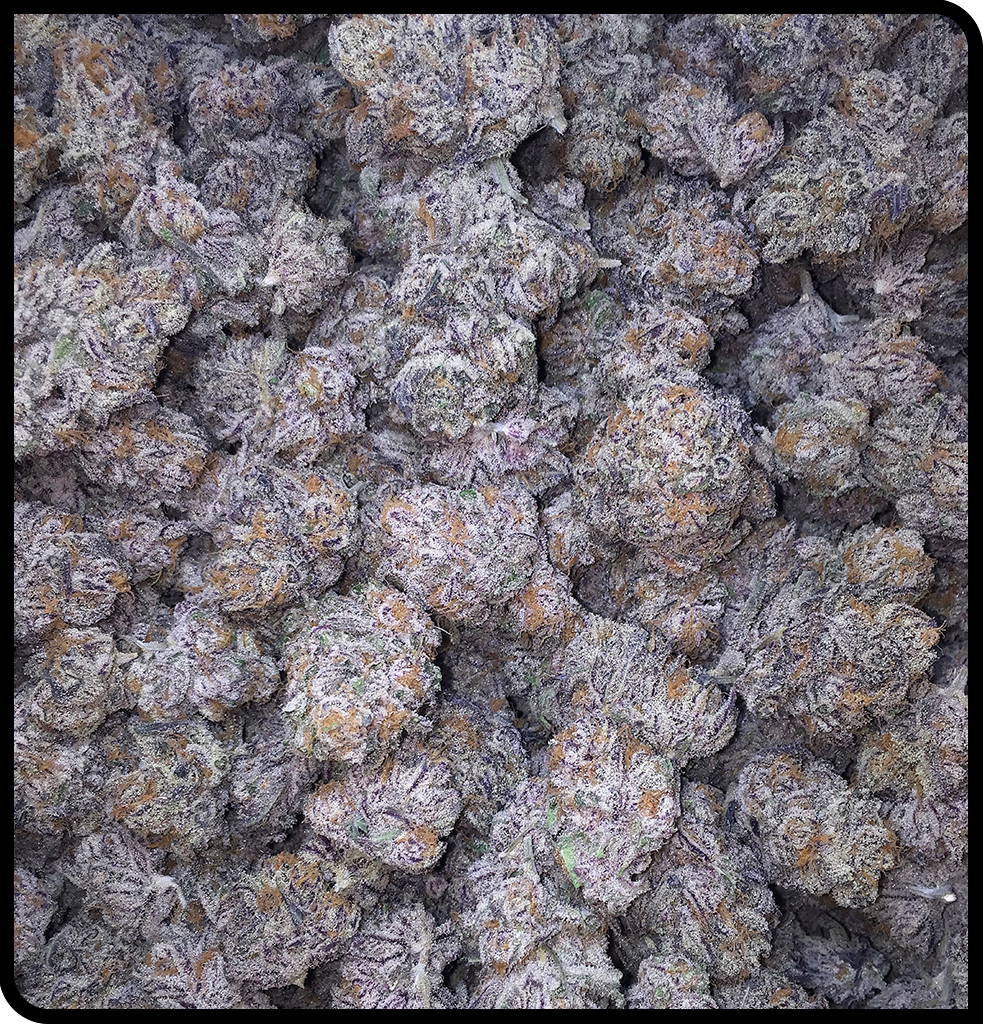 PURPLE PUNCH Grown by The Village