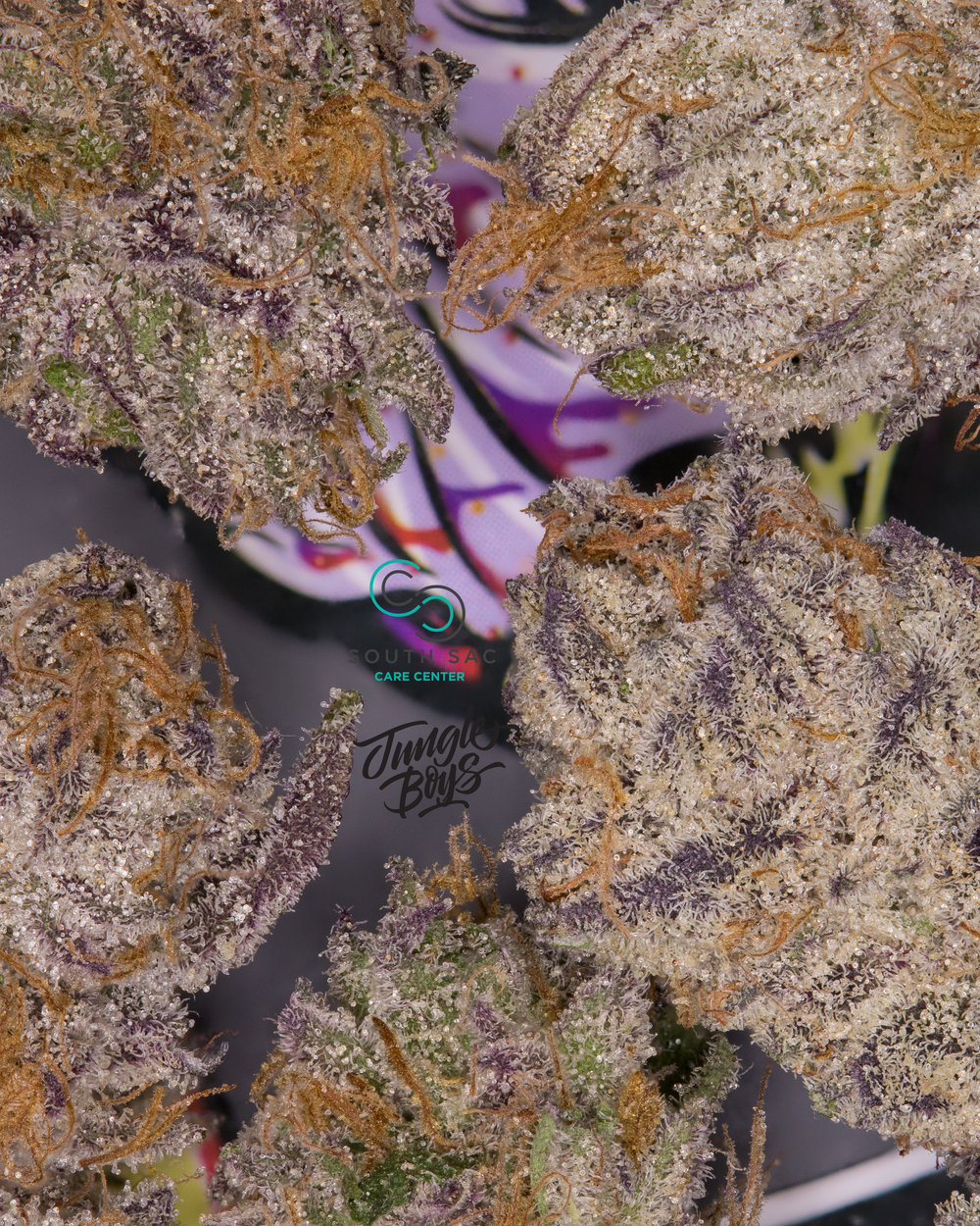 Sundae Driver #19. This phenotype has the most purple & the strongest aroma of all three phenos.