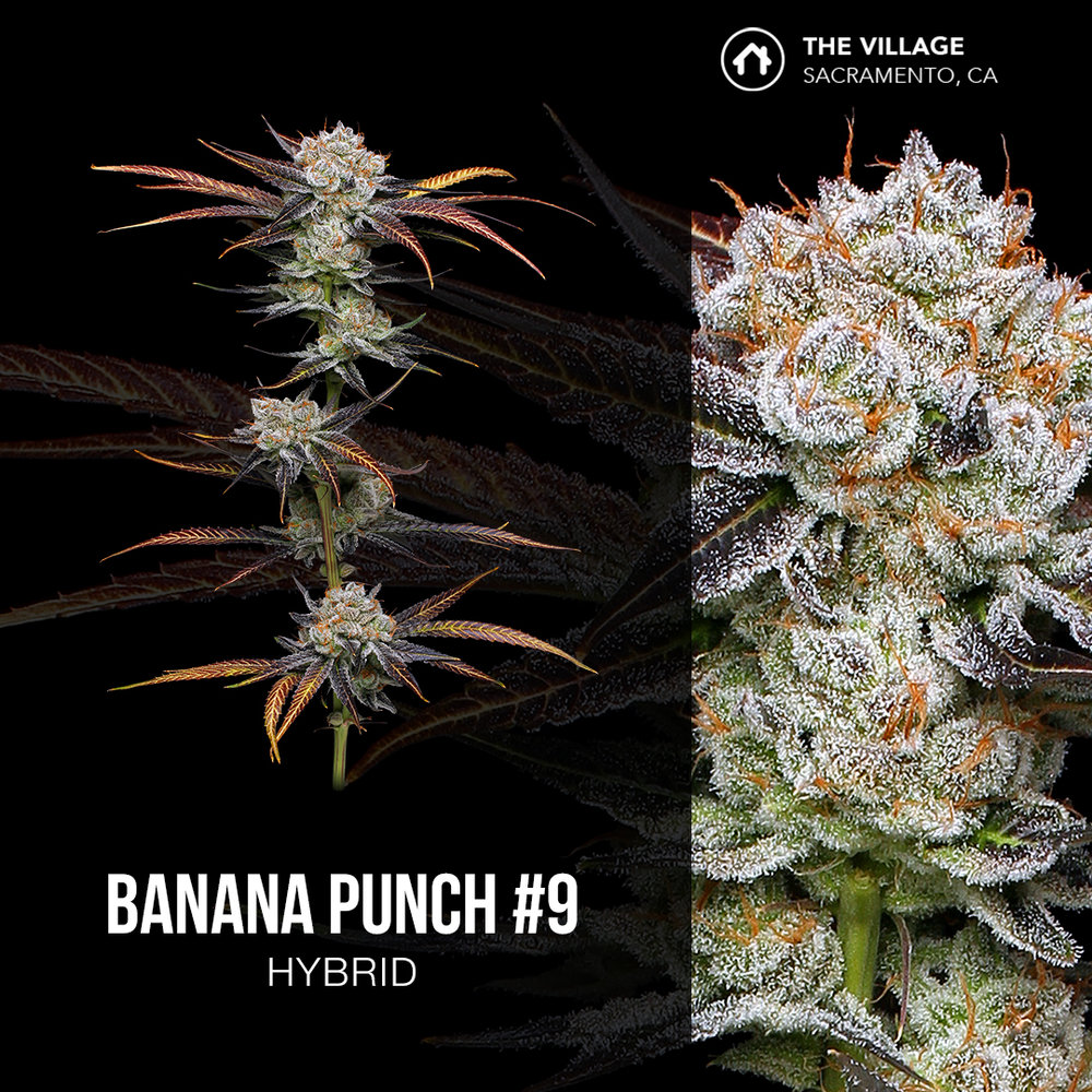 Banana Punch #9-Square.jpg