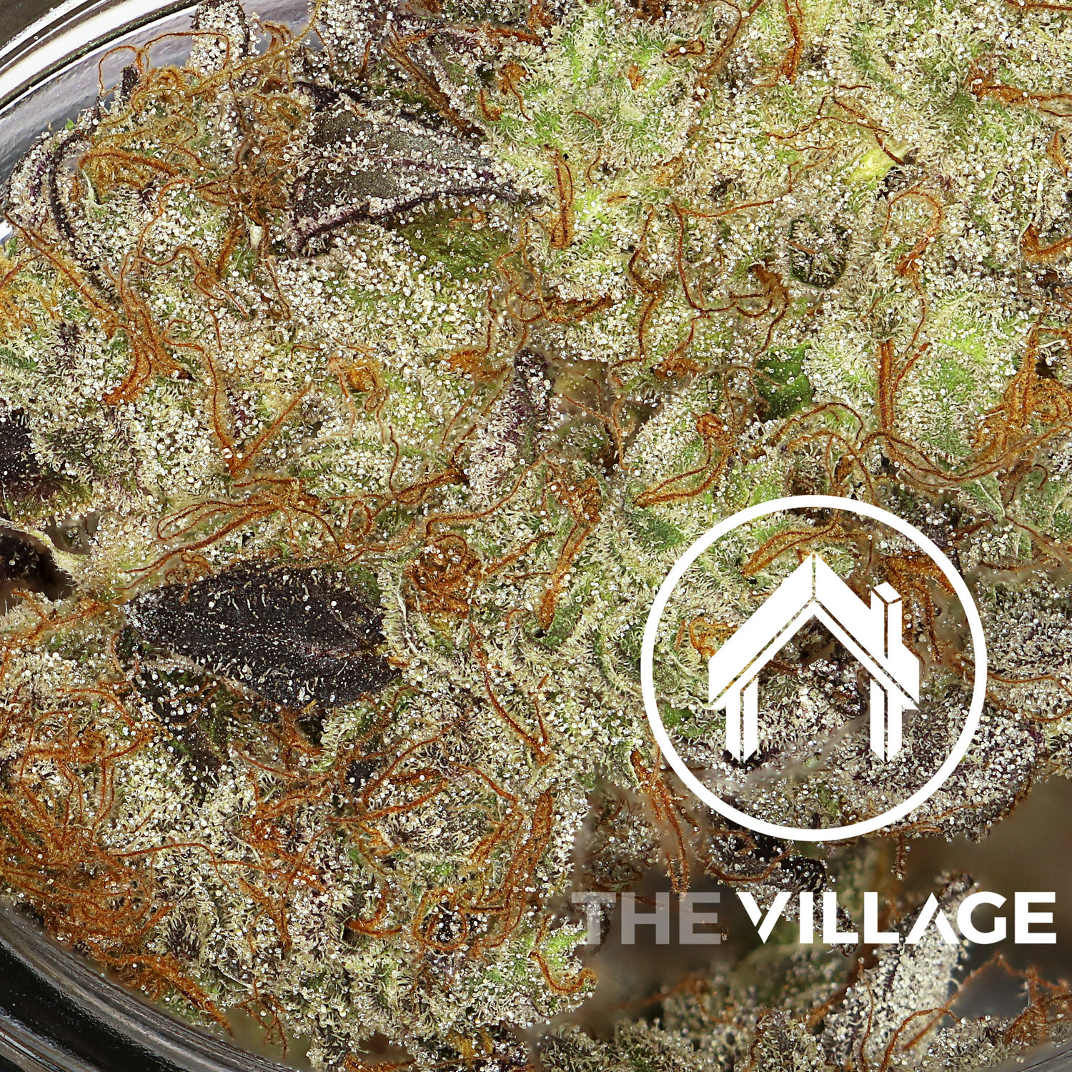 New Village Flower Will Blow You Away! — South Sacramento
