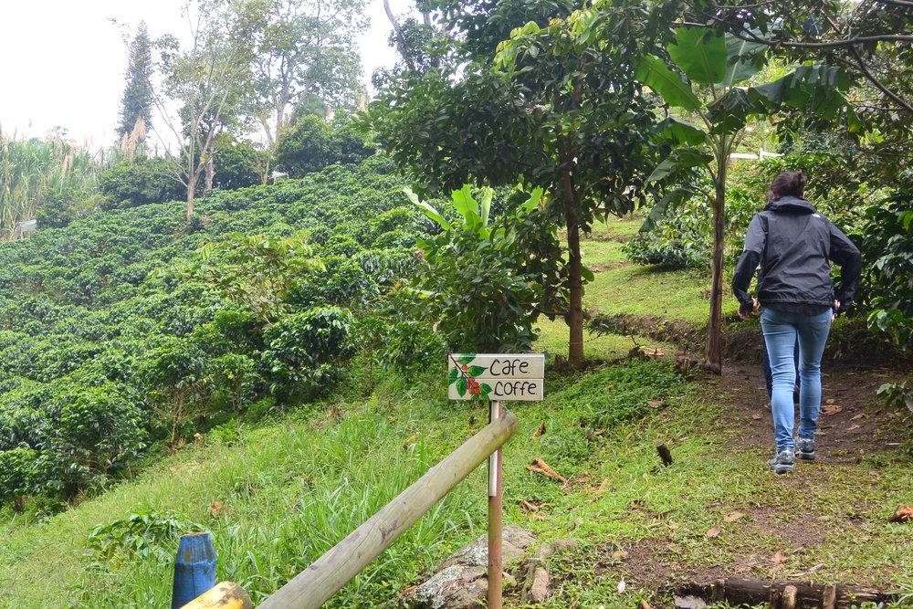 Heading into the hills towards the coffee farm