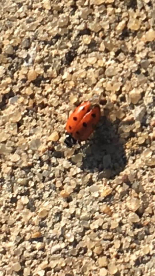 Annnnnnnnnnnnd, a ladybug as we were leaving.