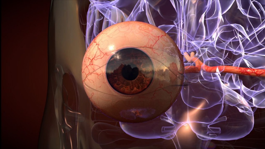 3d medical illustration of an eyeball