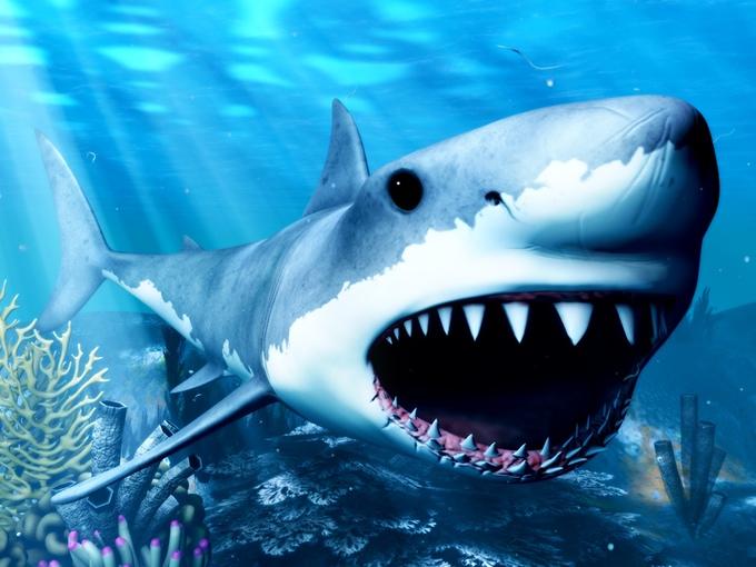 shark_vr_image.jpg