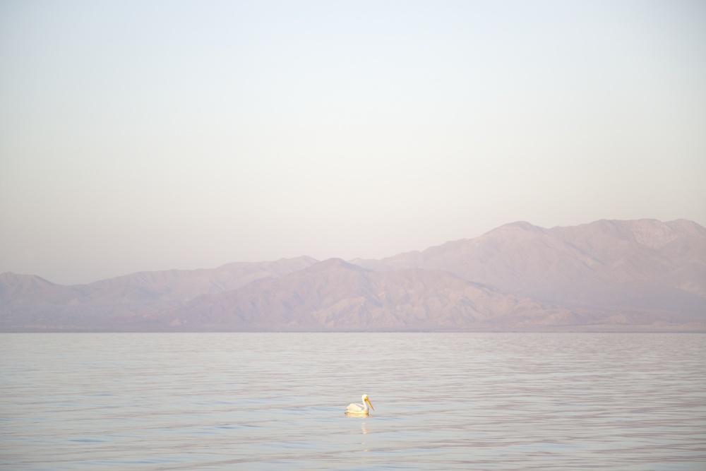 LYON 2014-04-19 674 Salton Sea copy2 (1) copy.jpg