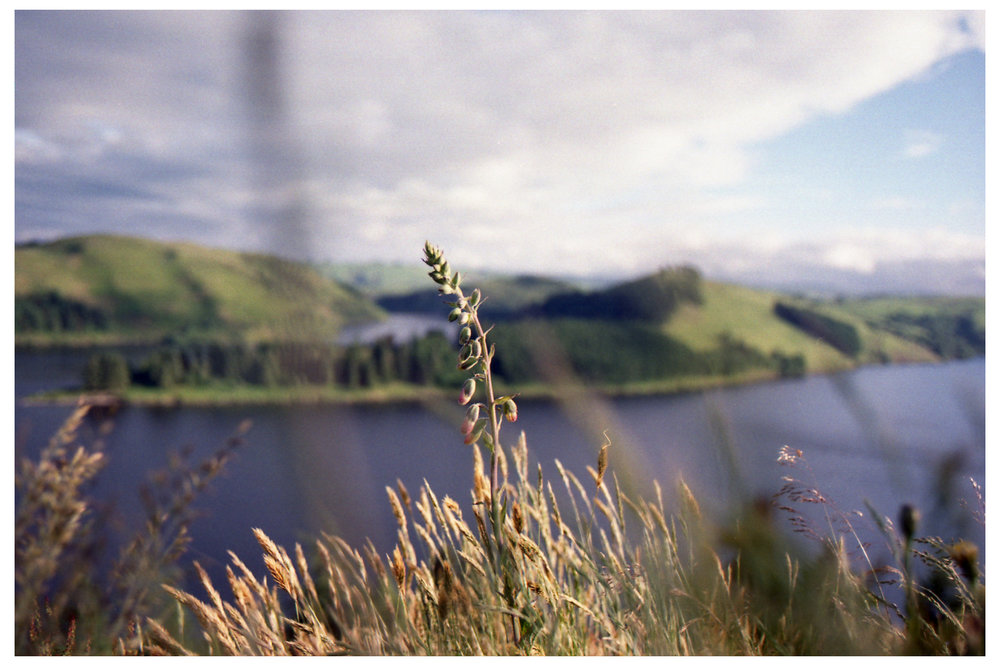 Flower & Lake.jpg
