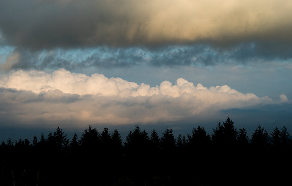 trees and clouds.jpg