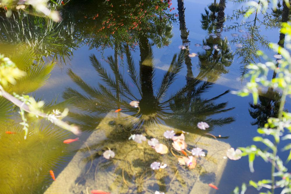 palm reflection.jpg