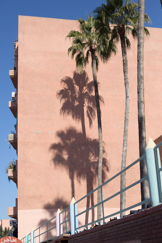 palm shadows.jpg