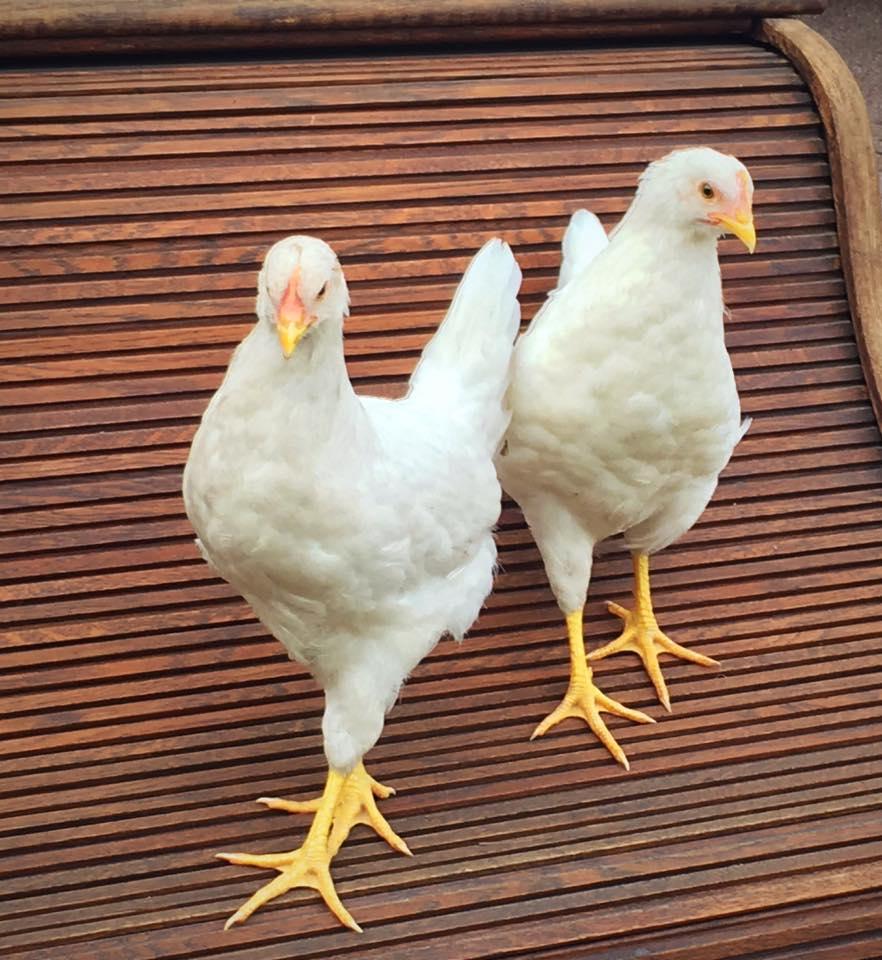 FRIEDA & AMBER