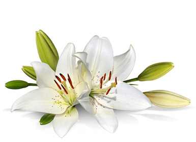 easter-lily3.jpg