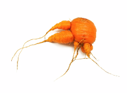 nubby carrot.png