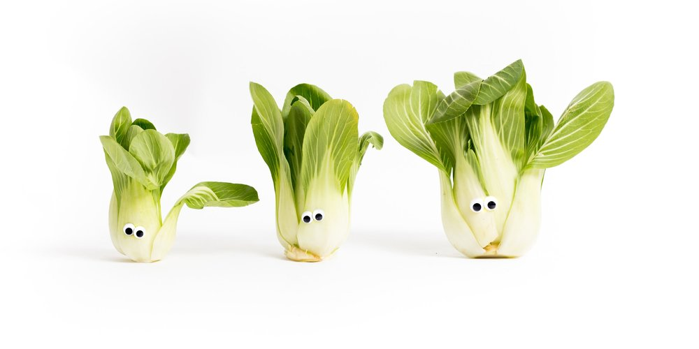 While Bok Choy normally avoids the media spotlight, its Brassica beauty stole the show during a recent photo shoot at Imperfect HQ.