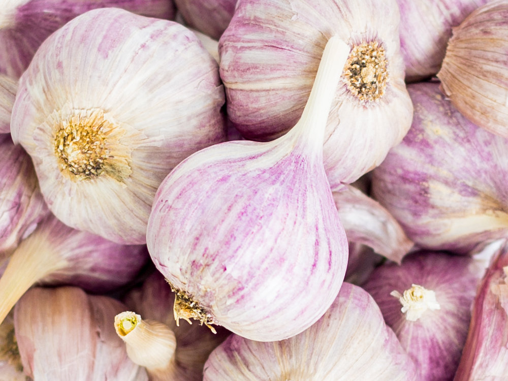 Purple Garlic Newsletter.jpg