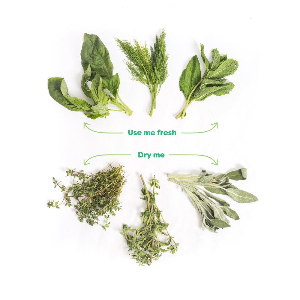 Lifestyle_Herbs_IP-02.jpg