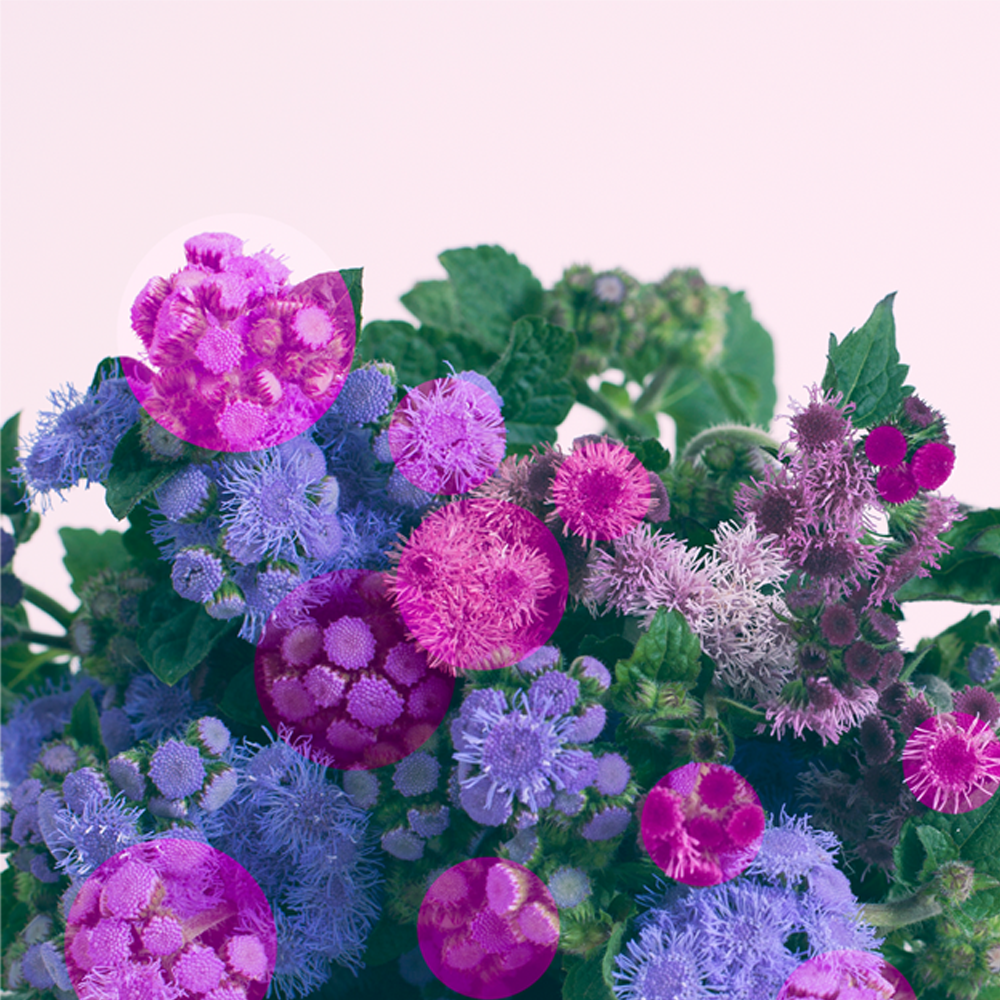thistles.png