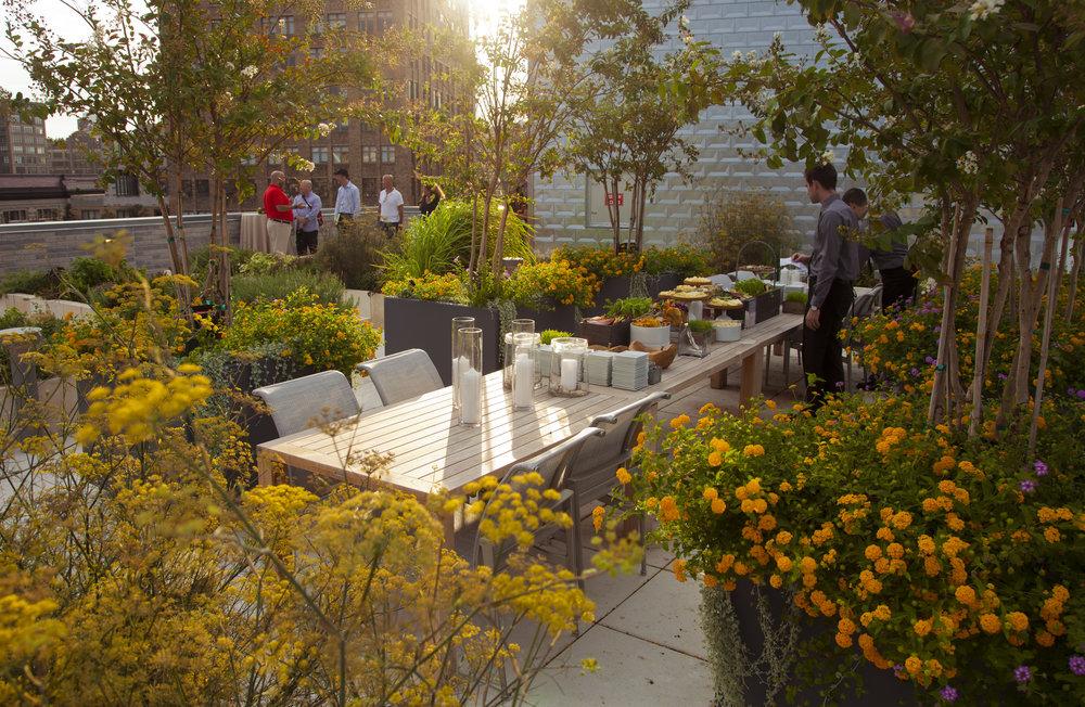 Rooftop Garden Bloom.jpg