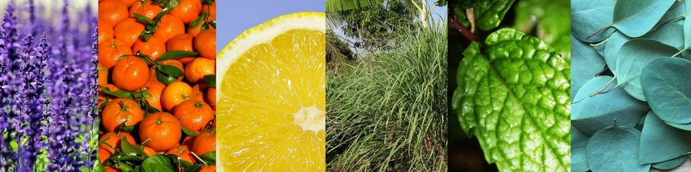 Lavender Tangerine Lemon Lemongrass Peppermint Eucalyptus Essential Oils Aromatherapy Niasoma Bodywork
