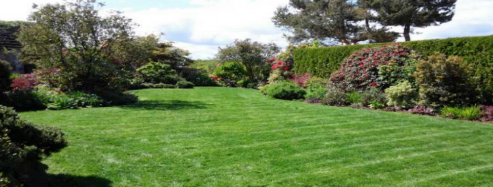 lawn ad (1).png