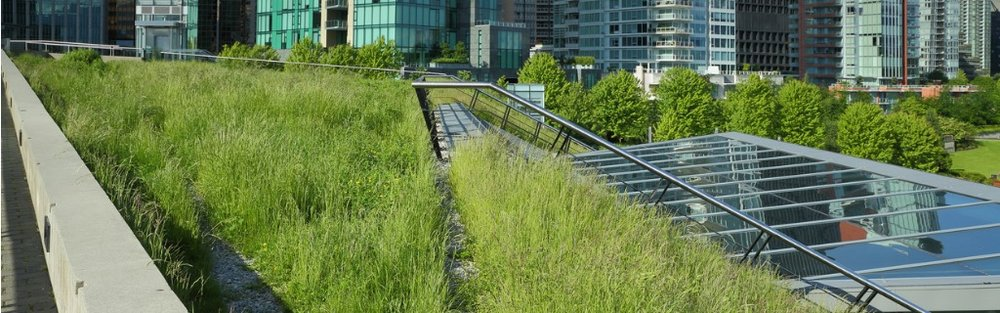 grass-growing-on-a-green-roof-picture-id495609437.jpg