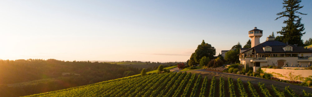 Willamette Valley Vineyard at dusk. Photo by Andrea Johnson