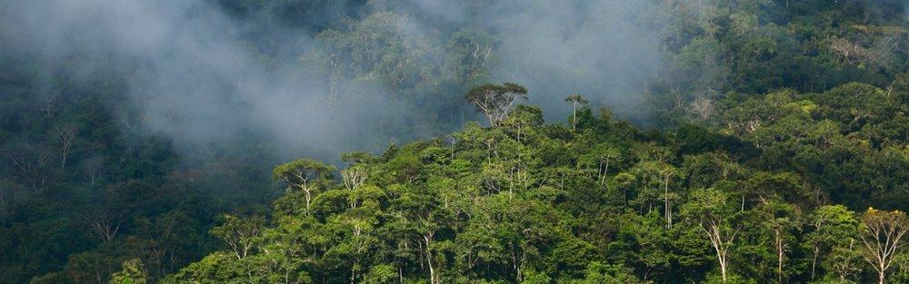 PUR Projet-misty trees-Christian LaMontagne (2).jpeg
