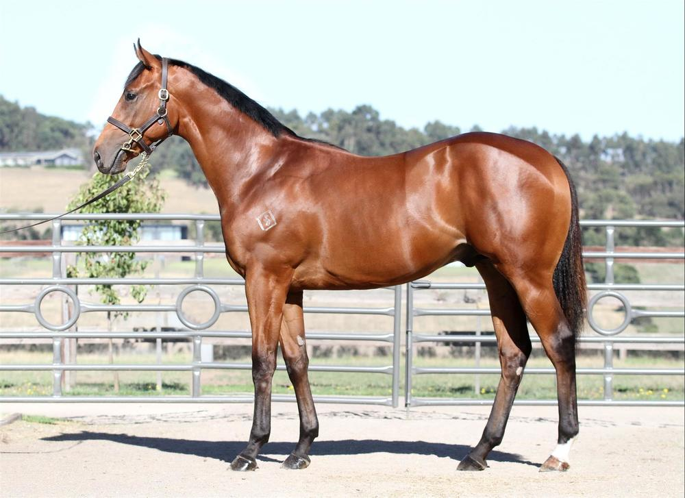 Inglis Premier - Lot 486 Choisir x Borderline - Bay Colt