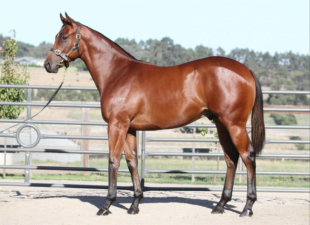 Inglis Premier - Lot 317 Helmet x Royal Singer - Bay Colt