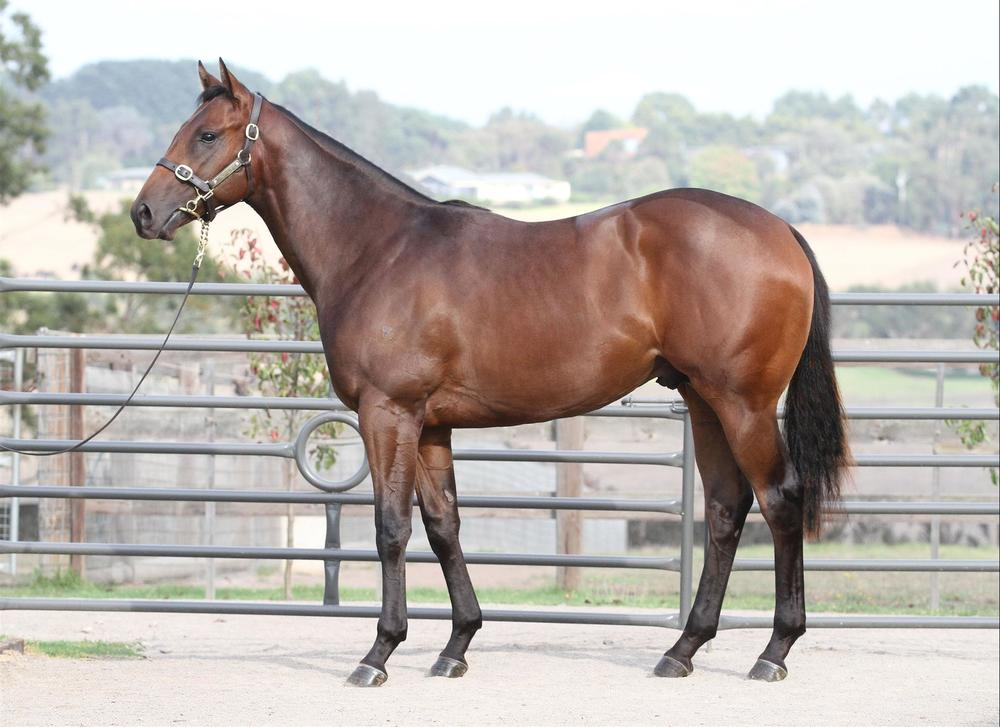 Inglis Easter - Lot 98 All Too Hard x Sublimity - Bay Colt