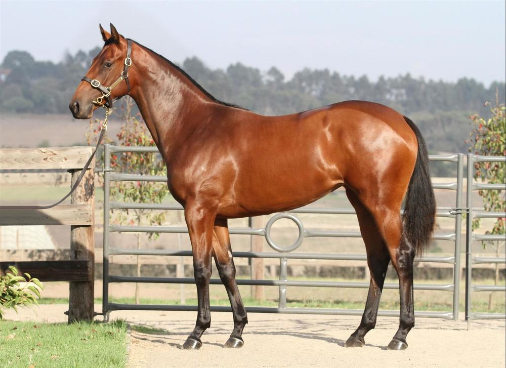 Inglis Easter - Lot 216 Stratum x Bubble Below - Bay Filly