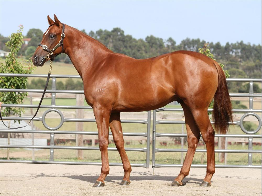 MM Lot 199 - Sebring x Eramor - Chestnut Colt
