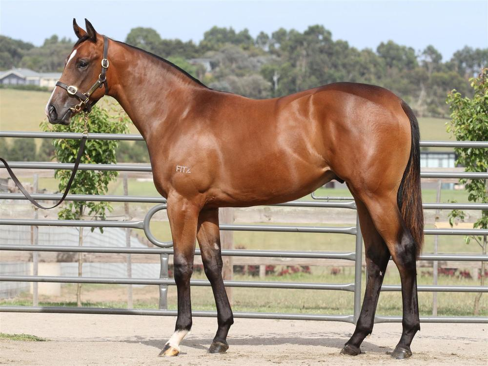MM Lot 248- Sebring x Free Spirited - Bay Colt