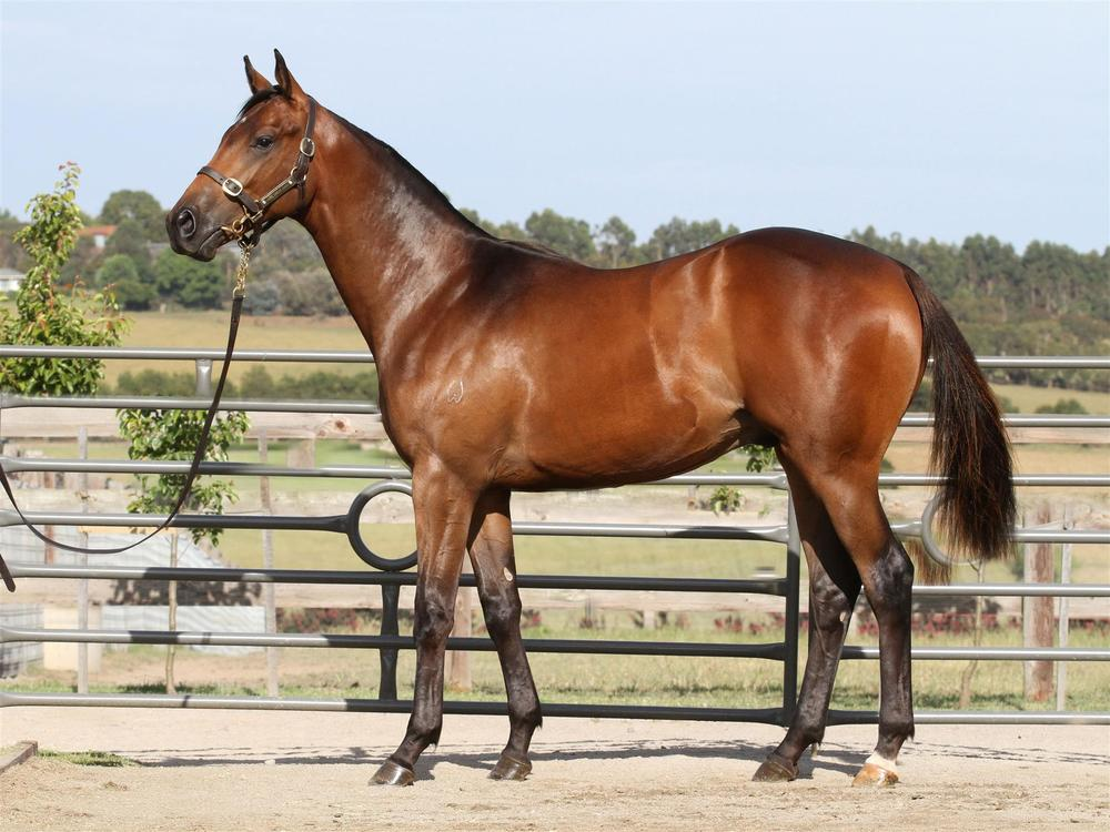 MM Lot 655 - Teofilo x Sweet Little Lies - Brown Colt