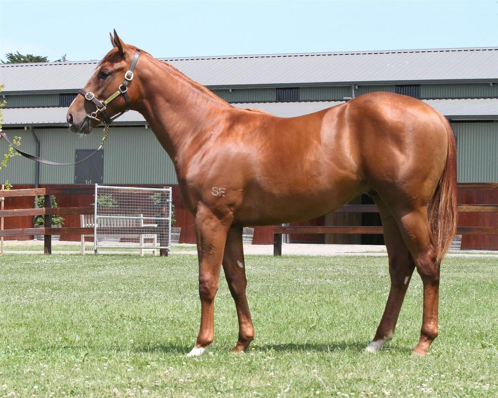 Lot 387 Magic Millions Gold Coast - Sepoy x Leica Lotto