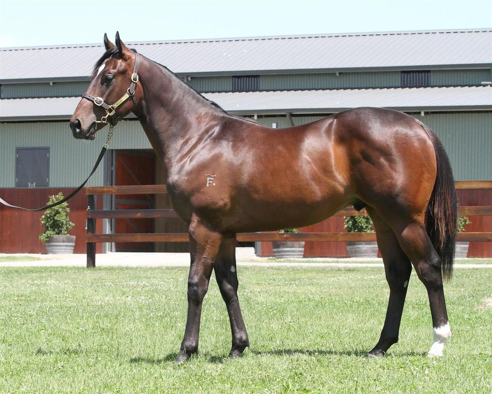 Lot 457 Magic Millions Gold Coast - Denman x Moama