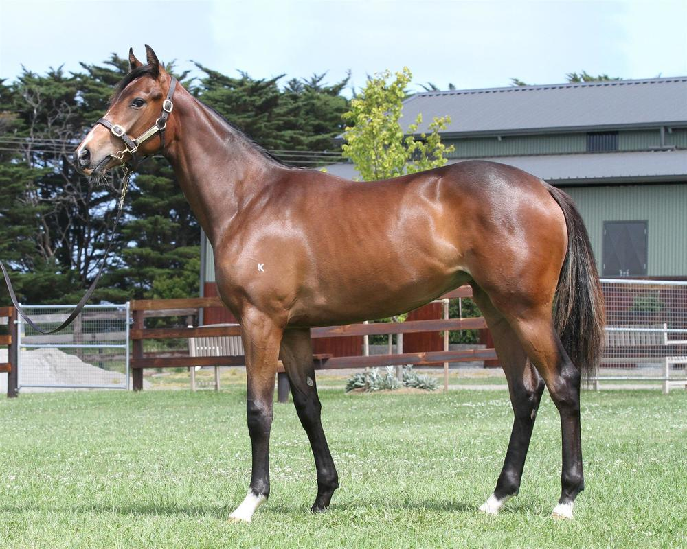 Inglis Classic Sydney Lot 475 Dream Ahead x Weesmallhours