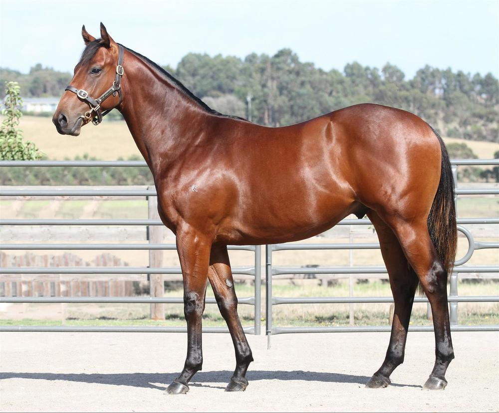 Inglis Premier - Lot 59 Wanted x Bubble Below